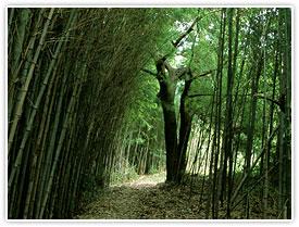 神々がすまう巡礼路、「熊野古道」を踏みしめて
