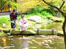 【日本庭園】ラウンジ前の庭園では色彩豊かな錦鯉が泳いでおります。