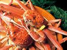 蟹まるごと1杯食べてお腹一杯!