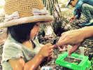 夏休み恒例の『ちびっこパック』虫捕り体験