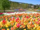 色とりどりの花咲き乱れる春の淡路島へ