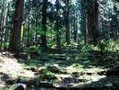 三大修験場【小菅神社】奥社へ続く杉並木!神秘的! かつ 絶景です!