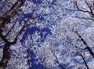 """☆御在所岳山頂にできる自然の芸術作品""""樹氷""""☆"""