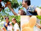 フルーツ王国岡山・最大級の観光農園で白桃狩りをお楽しみ下さい♪