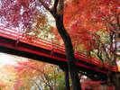 【養父神社の紅葉】11月上旬~中旬頃(当館より車約1時間)写真提供:養父神社