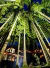 回廊の木立を望めば、天の川が横たわる