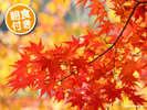 秋イメージ2