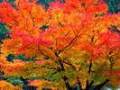 秋色に染まる城下町散策をお楽しみ下さい。