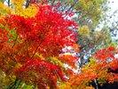 ◆敷地内紅葉/11月上旬ころが見頃