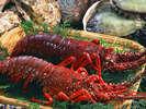 近海で獲れたプリップリの伊勢えび、もしくはアワビよりお好きな方を選べます♪