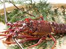 プリプリの伊勢海老☆洋食料理長が腕を揮ってご用意するコースをお楽しみください。