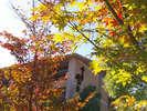 お迎えする木々も、色鮮やかに。紅葉の見ごろは例年11月頃♪