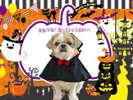 ハロウィンプラン愛犬と一緒に楽しい時間を過ごそう!