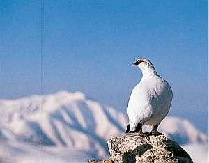 立山を象徴する鳥で当館の名前の由来です