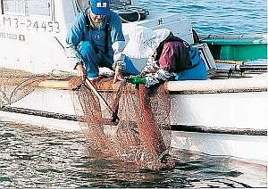 漁師さんの水揚げによって、食材は日替わりです。