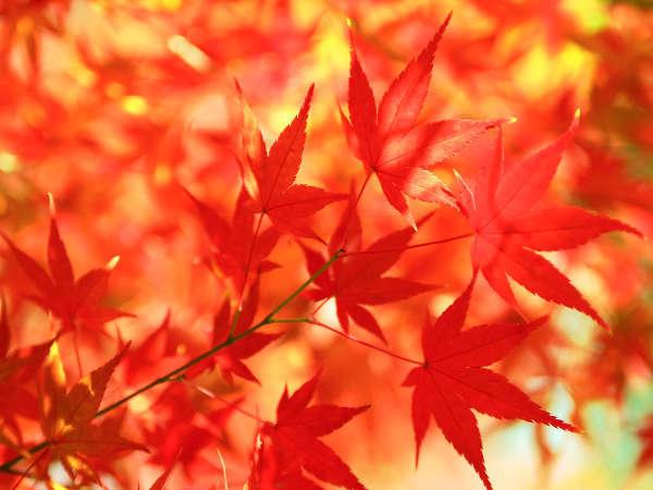 【期間限定】山形ブランド「米の娘ぶた」×「秋の味覚♪地元の採れたてきのこ三昧」!!舞茸土瓶蒸し付