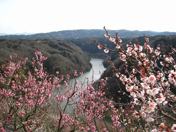【春旅/マイカープラン】日本最初の名勝地「月ヶ瀬梅林」の梅とぬる湯の温泉を満喫≪伊賀創作和食・四季≫