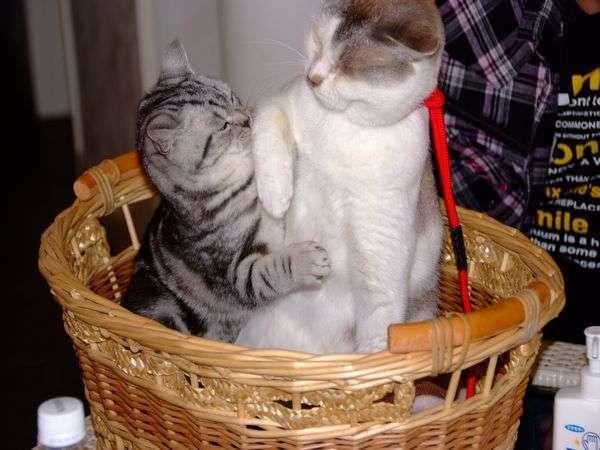 猫ちゃん大好き!【特典】300円お得な猫の博物館のチケット付きプラン