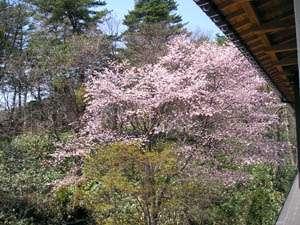 Kirishimaya Ryokan