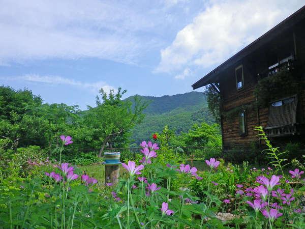 クリンソウの咲く庭
