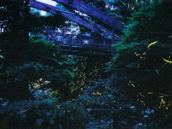 【ホタルに出会う夜】蛍が舞う秘密のスポットへ無料送迎いたします!