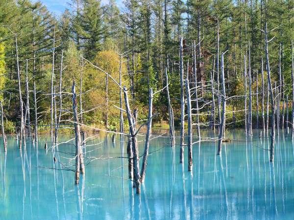 神秘な青池。冬のライトアップがとても素敵です。
