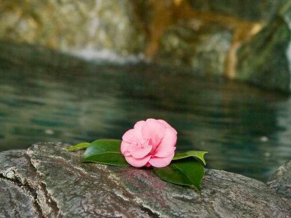 ■露天風呂/露天風呂の庭園にも椿の花が・・・。