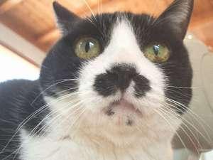 【湯布院旅行をお考えのネコちゃんが大好きなアナタへ♪】レ・ボー1番人気!豊後牛☆すき焼きプラン♪