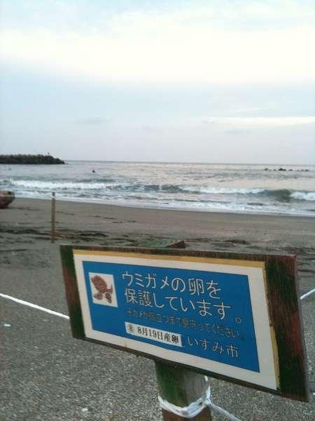 お部屋からご覧頂く日在浦は海ガメの産卵ビーチにもなっています。