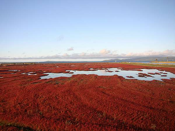 秋のお花見-サンゴ草