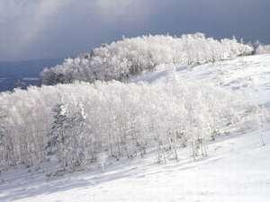 標高2000m厳冬の冬・山小舎ならではのあったか鍋プランー【桜鍋】コース