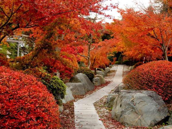 真っ赤に染まる秋の紅葉(例年11月10日前後が見頃)