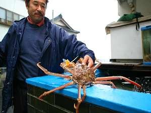 【ドキドキプラン】 蟹以外は何が並ぶかはお任せ