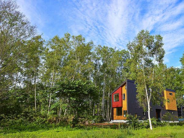 白樺林の緑に囲まれ心地よい風が吹くグリーン茶草