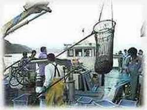 エイヤサアーヨイヤサアー漁師達の掛け声が聞こえてきそうな定置網