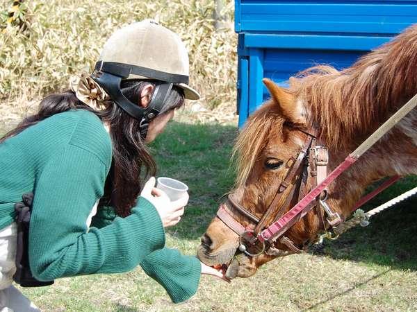 乗馬体験や馬との触れ合いのひと時も