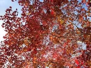 【11月 2泊OK!】ニセコモイワスキー場近く1棟貸し別荘素泊まりプラン