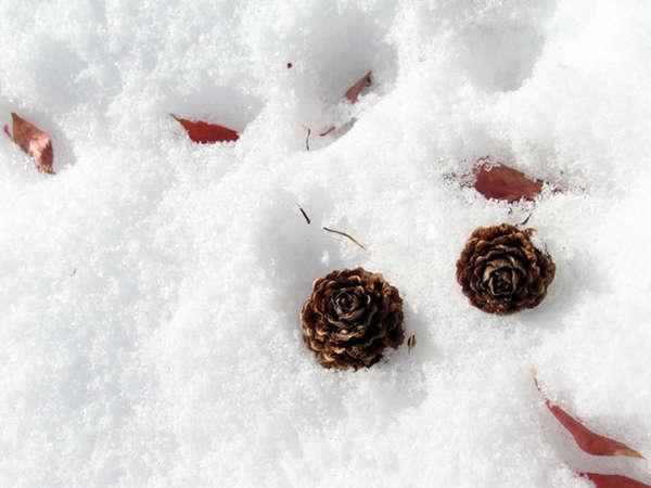 【冬季限定】早朝チェックアウトの方にもオススメ♪1泊夕食付プラン