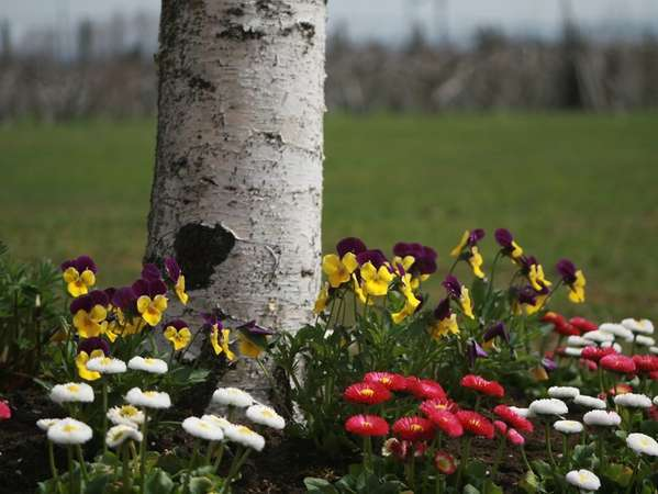 英国貴族の館   施設の周りのお花畑