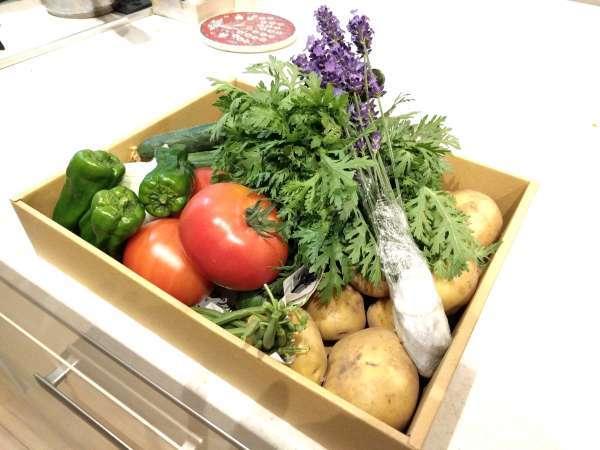 ■北海道素材の野菜■四季それぞれの味覚を前菜やサラダに取り入れています