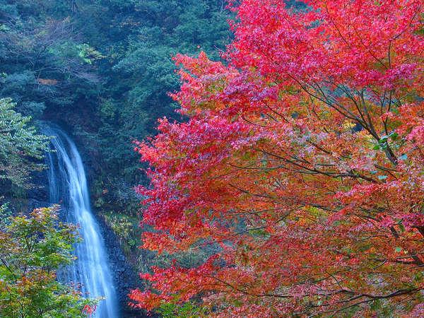 【紅葉シーズン】\\丹波篠山が誇る絶景もみじ三山めぐり//旬の食材の香りひろがる秋旅大満喫プラン♪