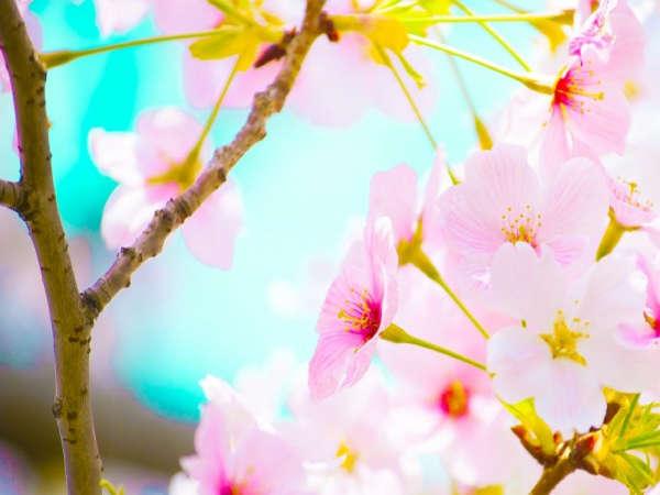 【春旅】さくらプラン日〜木限定【朝食付】