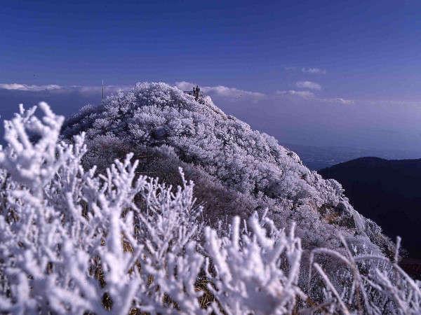 山の木々に霧が凍りつく霧氷☆
