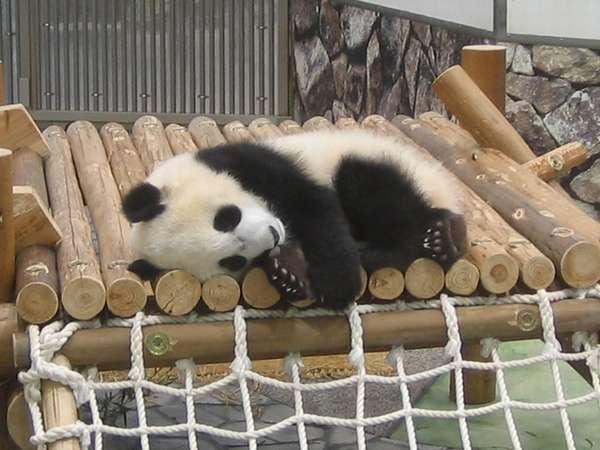 アドベンチャーワールド入場券付☆ジャイアントパンダに会いに行こう!【2食付】