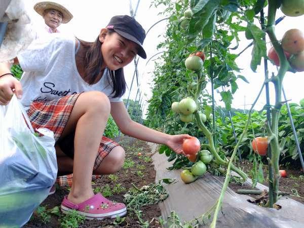 清ちゃん農園の有機野菜の収穫体験♪野菜そのままお持ち帰りプラン