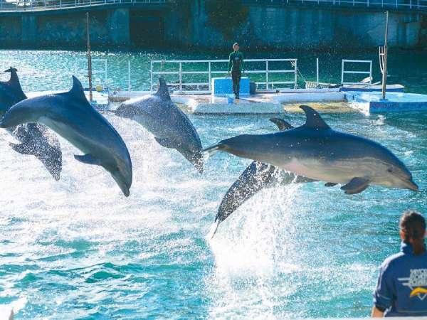 【 湯苑 × 下田海中水族館コラボ企画 】小さなお子様でもイルカと遊べるよ!旬の地魚チョイスプラン