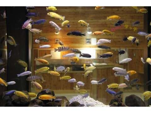 北の大地の水族館 色とりどりの魚