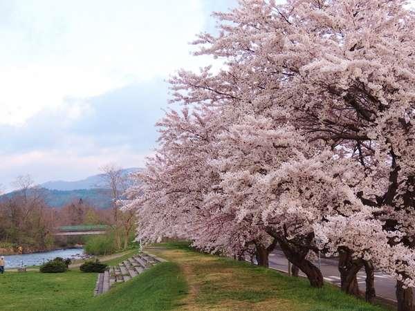 「法亀寺のしだれ桜」は当館から徒歩圏★北斗市は桜めぐりプラン♪気軽に素泊まり♪特典付き★