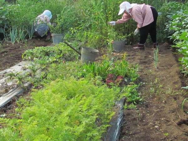 【1泊朝食】収穫した大豆の自家製お味噌汁の手料理