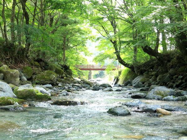 自然に囲まれてのんびりお過ごし下さい♪
